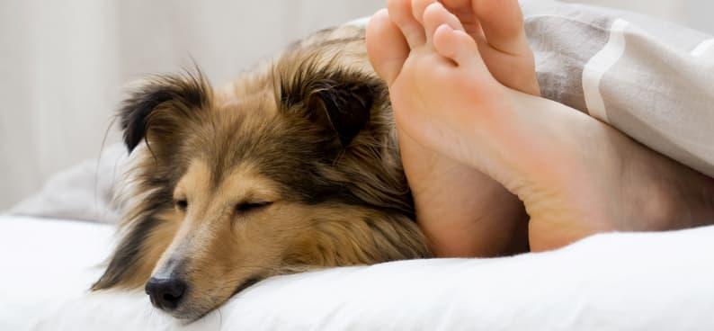 colchon para dormir con tu mascota